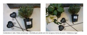 piante da terrazzo