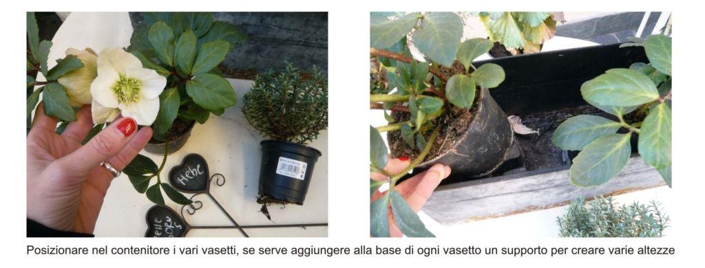 piante da terrazzo 2