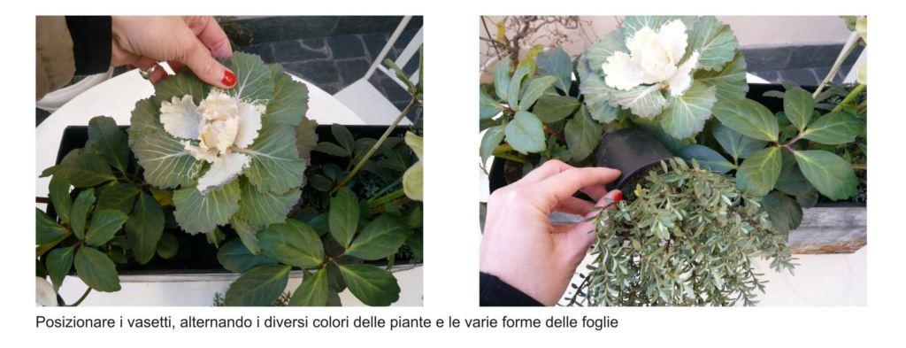 piante da terrazzo 3