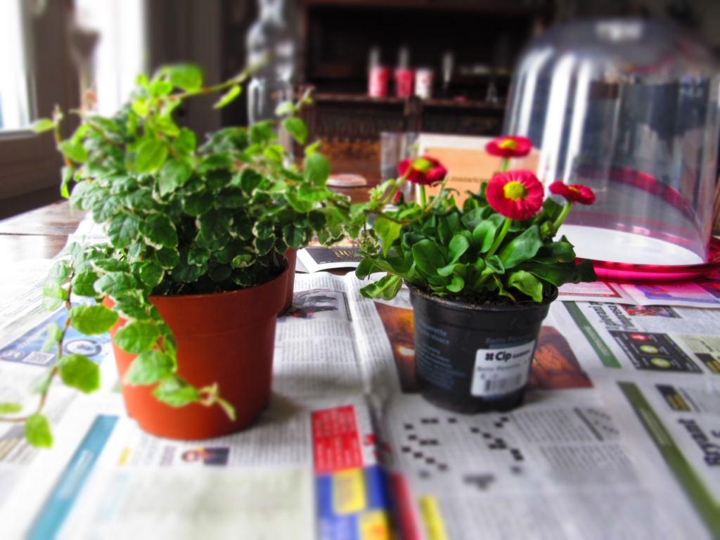 giardino in miniatura 2