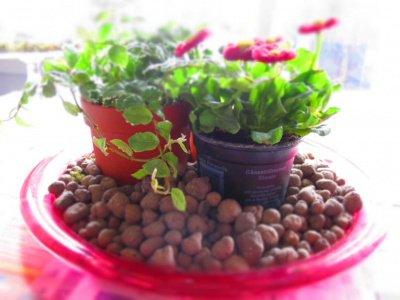 giardino in miniatura 4