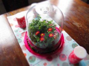 giardino in miniatura