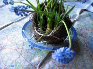 Centro tavola di Primavera