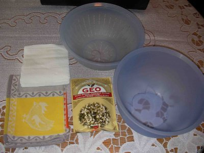germogli di soia