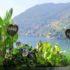 Davanzale di fiori ed erbe commestibili