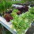 L'orto in terrazza col KIT si può