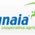 Filiera corta: dalla Grecia oltre 50 olivicoltori per conoscere l'olio toscano