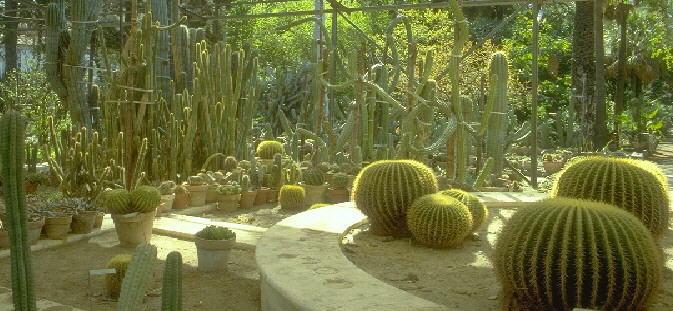 1294235990Orto_botanico.jpg