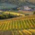 Toscana: un paesaggio agrario cangiante, ma vivo ed efficiente