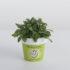 """Arrivano le piante aromatiche  eco-friendly col bollino """"Bureau Veritas"""""""