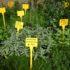 Si inaugura il vivaio eco sostenibile per le piante da orto e giardino