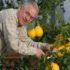 Come coltivare gli agrumi in terrazza: Oscar Tintori presenta il DVD
