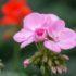 Cosa fare nel giardino d'aprile seguendo le fasi lunari: semine, trapianti, potature