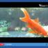Isole di plastica in mare: salviamo il pesce Kay