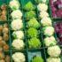 Come coltivare l'orto e condividere i prodotti via web
