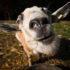 Biodiversità: le capre inglesi ripopoleranno l'ecosistema naturale