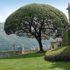 Il Giardino Nobile, 13 giardini storici all'italiana