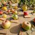 Pomarium, la V edizione dedicata al frutteto