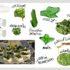 Cucina naturale: erbe selvatiche con la piadina romagnola