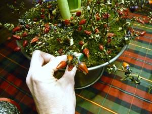 amaryllis-rossi