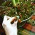 Decorazione di Natale con Amaryllis rossi