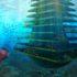 Sea Tree, l'oasi di biodiversità urbana