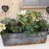 Con le piante da terrazzo come decorare il davanzale  nel mese gennaio
