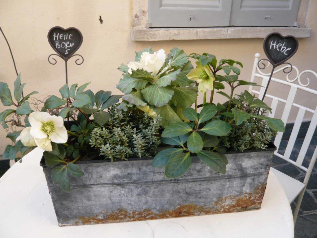 Con le piante da terrazzo come decorare il davanzale nel mese gennaio - Decori per finestre esterne ...