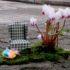 Riempire le buche con fiori e divani: è la scommessa di Steve Wheen