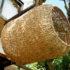Il nido gigante fatto per gli uomini