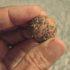 Guerrilla Gardening: come si fanno le bombe di semi
