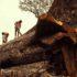 Col cellulare sull'albero si combatte la deforestazione