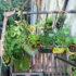 Come coltivare l'orto sul balcone (prima parte)