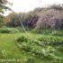 Come progettare un giardino: i primi passi dal disegno alla realizzazione