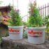 Come riutilizzare e riciclare i secchi dell'intonaco per poi coltivarci dei fiori e delle erbe aromatiche