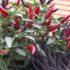 Come decorare il davanzale della finestra con piante autunnali