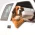 4 rimedi naturali per pulire l'auto