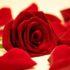 Il significato dei fiori: i segreti del linguaggio