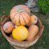 Nell'orto i lavori di marzo: i trapianti di pomodori e zucchine