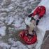 Cane nel ghiaccio salvato dalla Guardia Costiera