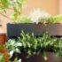 Suono Wall up®, il giardino verticale contro l'inquinamento acustico