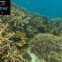 La barriera corallina su google maps