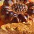 Pane di zucca (pumpkin bread) senza latte né burro (ricetta americana)