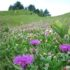 Erbe selvatiche commestibili: quali raccogliere ad aprile, prima parte