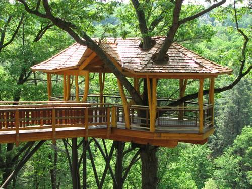 la_casa_sull_albero_O2.jpg