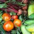 I lavori di giugno nell'orto sinergico e naturale tra semine, raccolte e trapianti