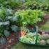 Lavori nell'orto naturale: cosa fare a marzo