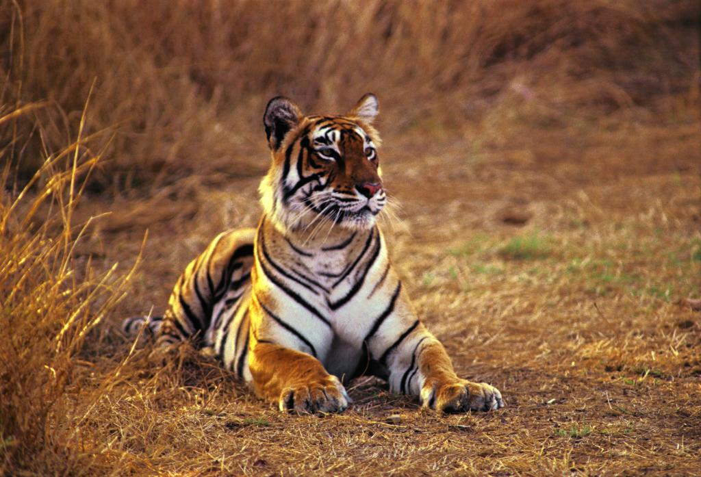 Tiger Project Ranthambore 01