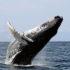 Dove vedere le balene in Italia e in Europa