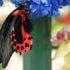 La Casa delle farfalle in 5 città italiane